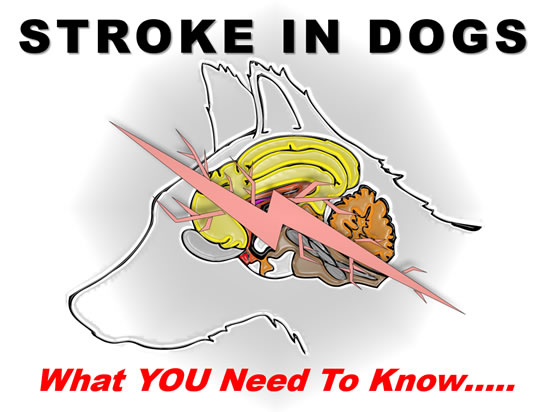 Stroke in Dogs: What You Need to Know – Emotions R Us